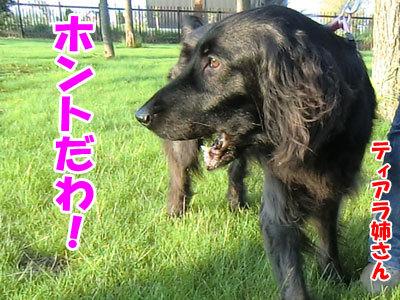 チャンスとティアラ+ココ-20120622-1-400.jpg