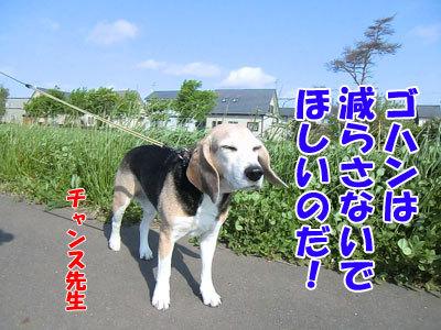 チャンスとティアラ+ココ-20120622-8-400.jpg