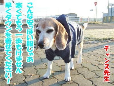 チャンスとティアラ+ココ-20101125-1-400.jpg
