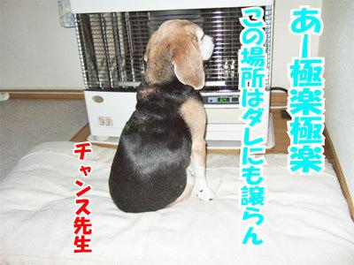 チャンスとティアラ+ココ-20101125-2-400.jpg