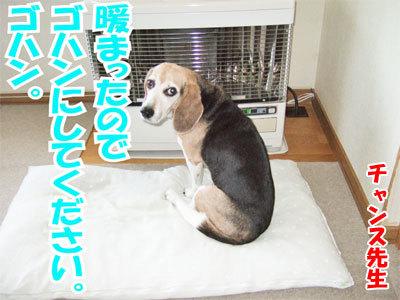 チャンスとティアラ+ココ-20101125-3-400.jpg