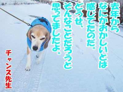 チャンスとティアラ+ココ-20101202-4-400.jpg