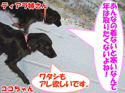 チャンスとティアラ+ココ-20101202-6-400.jpg