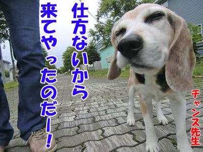 チャンスとティアラ+ココ-20120625-1-400.jpg