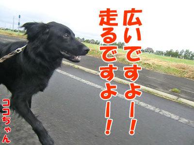 チャンスとティアラ+ココ-20120625-2-400.jpg