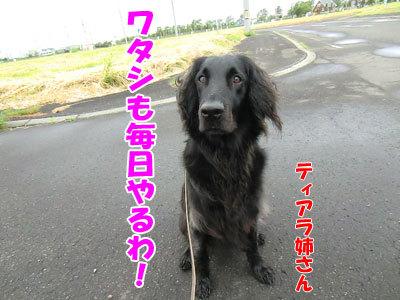 チャンスとティアラ+ココ-20120625-5-400.jpg