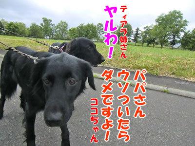 チャンスとティアラ+ココ-20120625-6-400.jpg