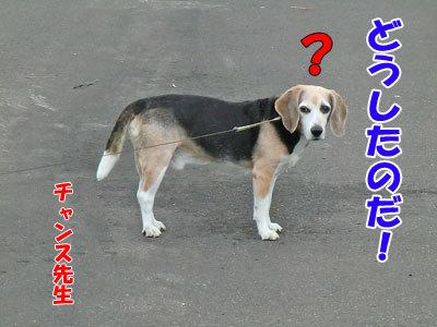 チャンスとティアラ+ココ-20120625-8-400.jpg