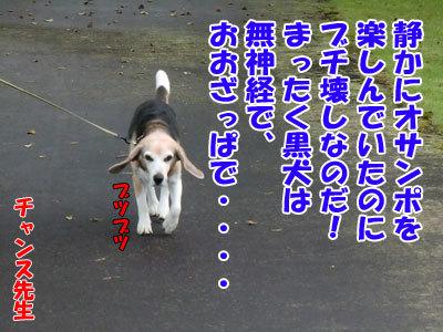 チャンスとティアラ+ココ-20120625-9-400.jpg