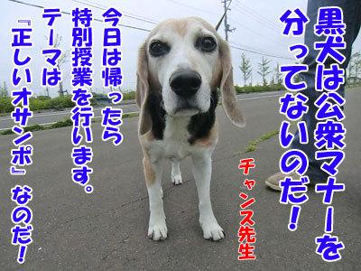 チャンスとティアラ+ココ-20120625-10-400.jpg
