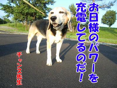 チャンスとティアラ+ココ-20120626-1-400.jpg