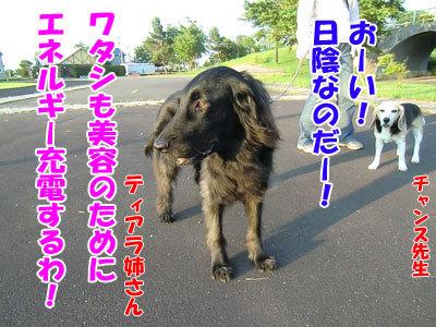 チャンスとティアラ+ココ-20120626-2-400.jpg