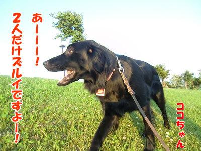 チャンスとティアラ+ココ-20120626-3-400.jpg
