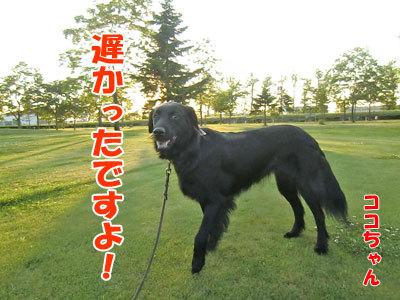 チャンスとティアラ+ココ-20120626-4-400.jpg