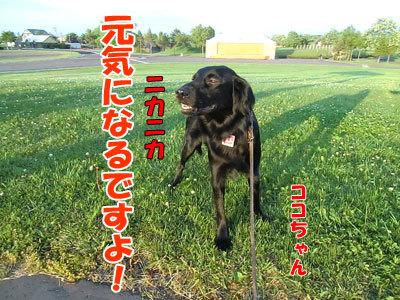 チャンスとティアラ+ココ-20120626-6-400.jpg