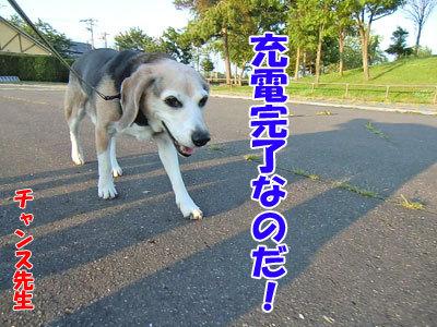 チャンスとティアラ+ココ-20120626-8-400.jpg