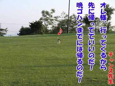 チャンスとティアラ+ココ-20120626-9-400.jpg