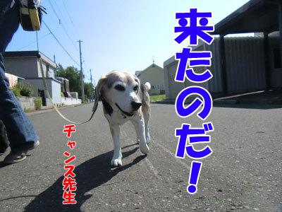 チャンスとティアラ+ココ-20120627-1-400.jpg