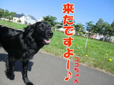 チャンスとティアラ+ココ-20120627-4-400.jpg
