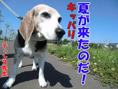 チャンスとティアラ+ココ-20120627-5-400.jpg