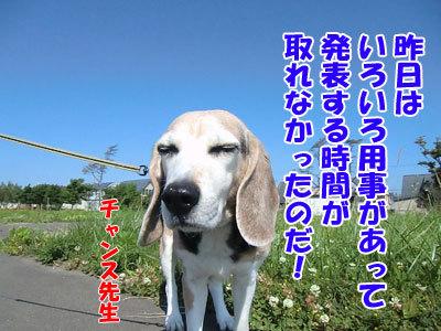 チャンスとティアラ+ココ-20120627-6-400.jpg