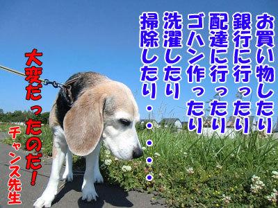 チャンスとティアラ+ココ-20120627-7-400.jpg