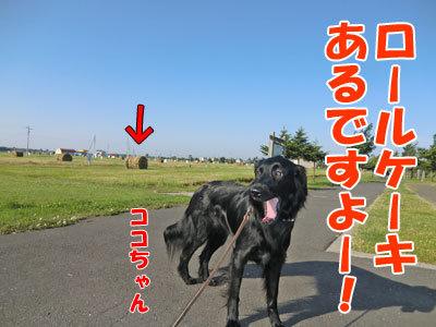 チャンスとティアラ+ココ-20120628-1-400.jpg