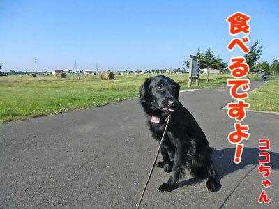 チャンスとティアラ+ココ-20120628-2-400.jpg