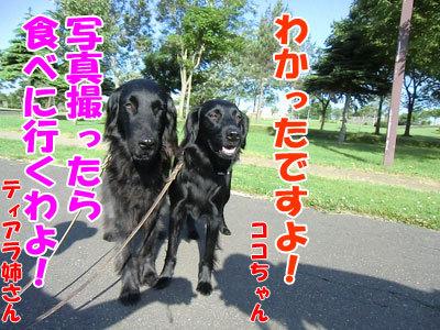 チャンスとティアラ+ココ-20120628-4-400.jpg