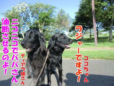 チャンスとティアラ+ココ-20120628-5-400.jpg