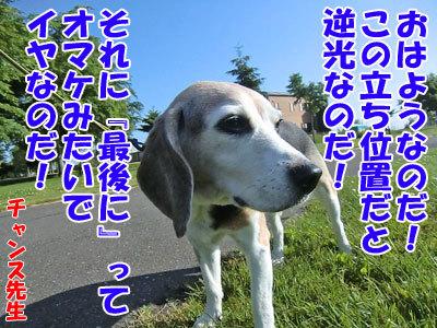 チャンスとティアラ+ココ-20120628-7-400.jpg