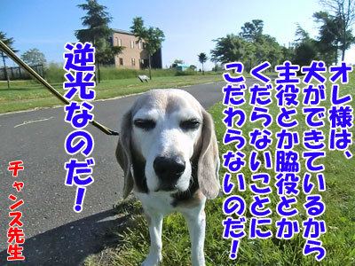 チャンスとティアラ+ココ-20120628-8-400.jpg