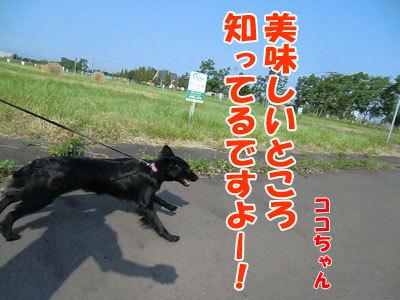 チャンスとティアラ+ココ-20120629-4-400.jpg