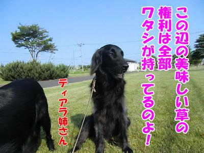 チャンスとティアラ+ココ-20120629-6-400.jpg