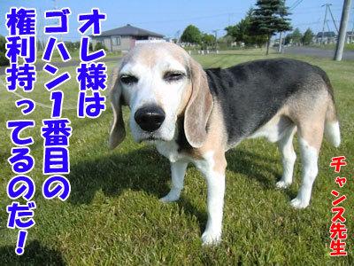 チャンスとティアラ+ココ-20120629-7-400.jpg