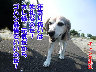 チャンスとティアラ+ココ-20120629-8-400.jpg
