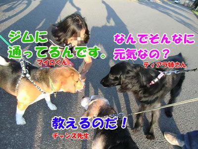 チャンスとティアラ+ココ-20120630-4-400.jpg