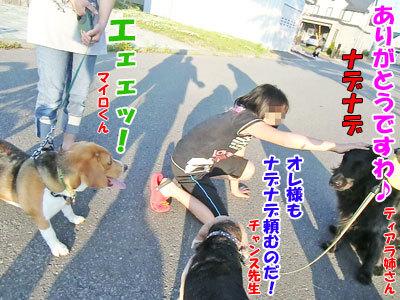 チャンスとティアラ+ココ-20120630-6-400.jpg