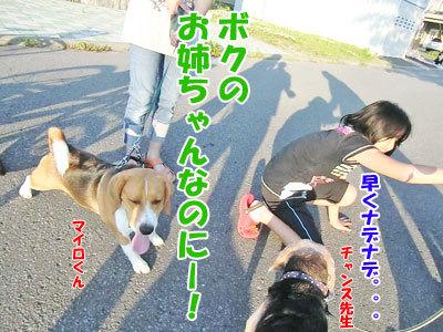 チャンスとティアラ+ココ-20120630-7-400.jpg