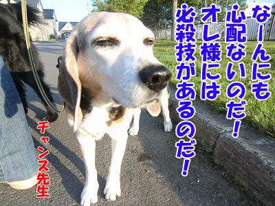 チャンスとティアラ+ココ-20120630-8-400.jpg