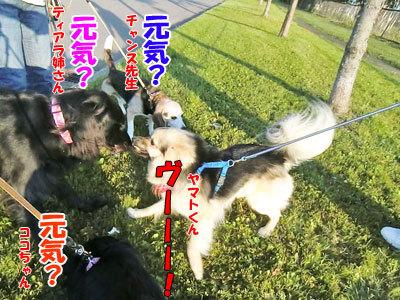 チャンスとティアラ+ココ-20120630-9-400.jpg