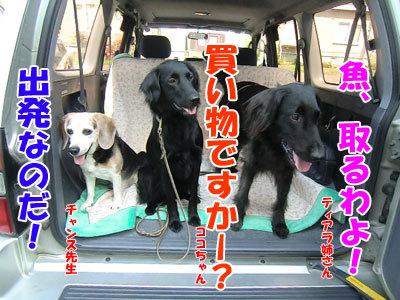 チャンスとティアラ+ココ-20120723-1-400.jpg