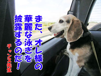 チャンスとティアラ+ココ-20120723-4-400.jpg