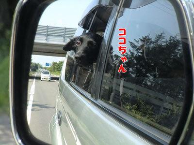 チャンスとティアラ+ココ-20120723-5-400.jpg