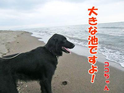 チャンスとティアラ+ココ-20120723-6-400.jpg