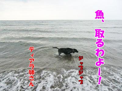 チャンスとティアラ+ココ-20120723-8-400.jpg