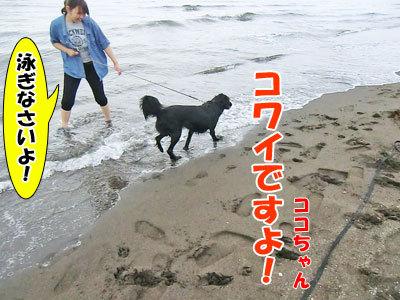 チャンスとティアラ+ココ-20120723-9-400.jpg