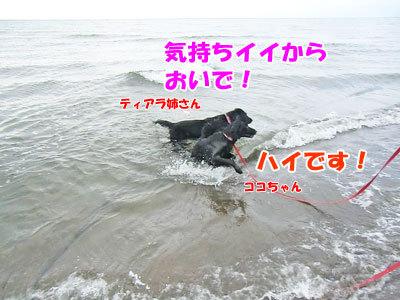 チャンスとティアラ+ココ-20120723-10-400.jpg