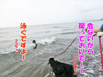 チャンスとティアラ+ココ-20120723-11-400.jpg