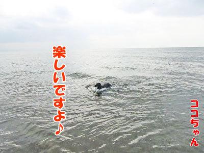 チャンスとティアラ+ココ-20120723-12-400.jpg